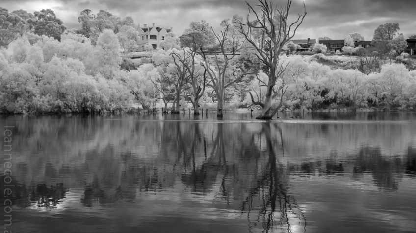 Weekend Wanderings - Infrared in the park