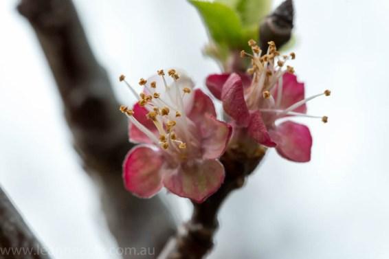 Floral Friday - Mum's garden