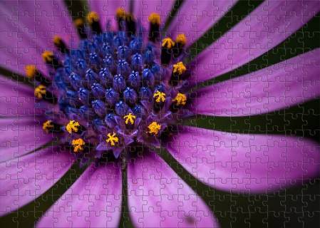 Floral Friday - Macro images in pieces