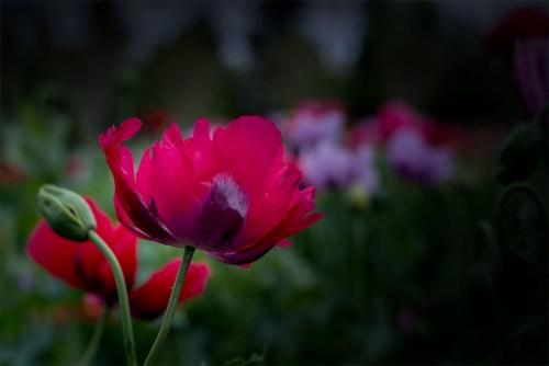 Floral Friday - Alowyn Gardens