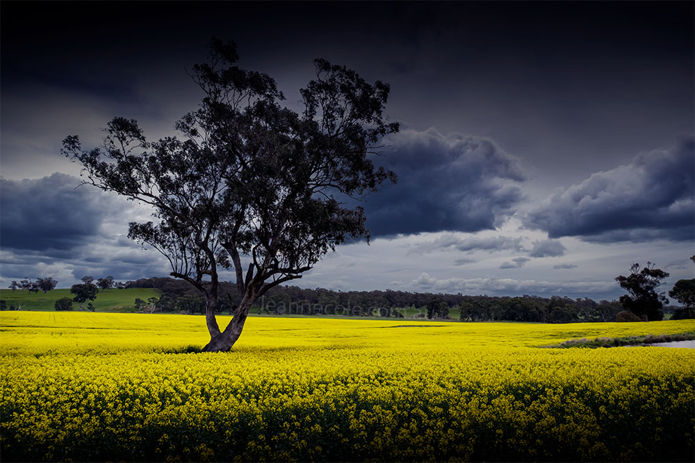 The Canola is out but it isn't public