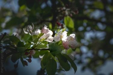 Springtime at Alowyn Gardens