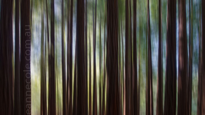 Tutorial - Sending trees skyward
