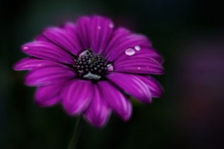 alowyn-gardens-macro-flower-rain