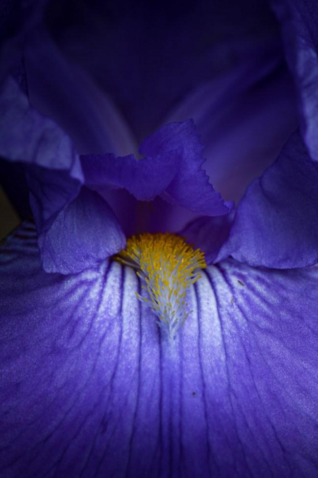 my-garden-flowers-spring-macro-1694