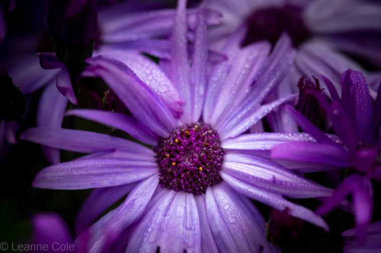 1-garden-winter-flowers