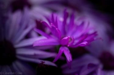 2-garden-winter-flowers
