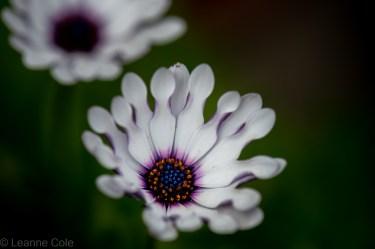 3-garden-winter-flowers