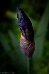 8-garden-winter-flowers