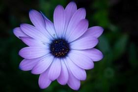 home-macro-flower-photograhy-1672