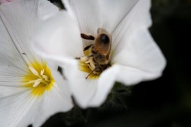 home-macro-flower-photograhy-1771