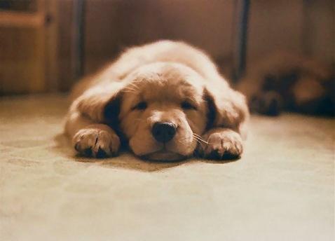 328-tired-dog-pv