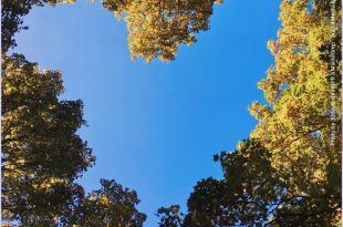 ramagem de galhos de árvores que formam uma moldura em forma de coração mostrando o céu ritual da gratidão