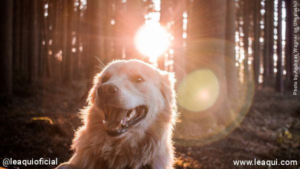 Cochorro em meioa uma floreste observando luzes etérea animais veem espíritos