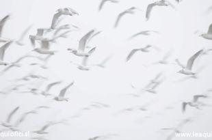 Pássaros em bando voando desencarnações coletivas