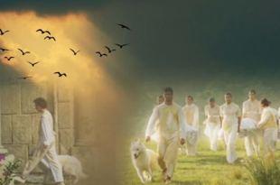 colagem de imagens com pássaros e cães em tarefa em nosso lar vida animais plano espiritual