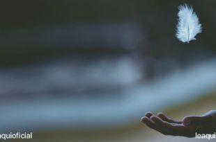mão aberta com a palma para cima aguardando um leve pluma branca cair felicidade compra