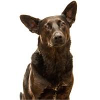 Chico Xavier fala da saudade de seu cão Lorde