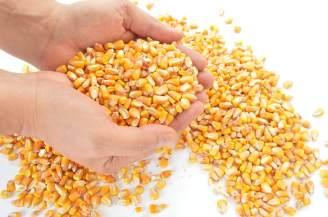 corn bulk-flow