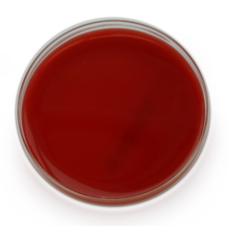 Plate Cartoon Agar Blood