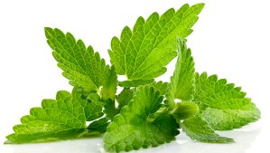 The Many Benefits of Mint