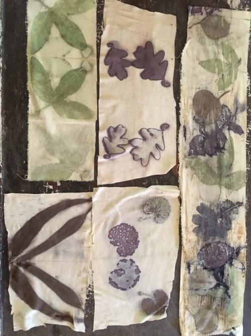 Bobbi Stowers: Testing different leaves on cotton