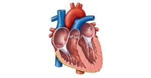 Lyme Carditis
