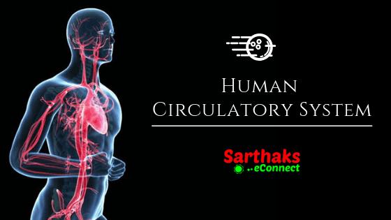 human circulatory system transportation