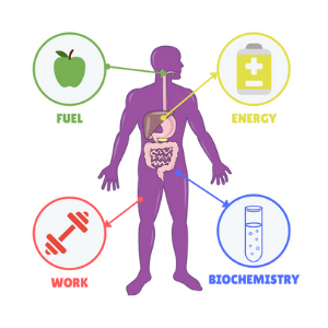 metabolism - life processes