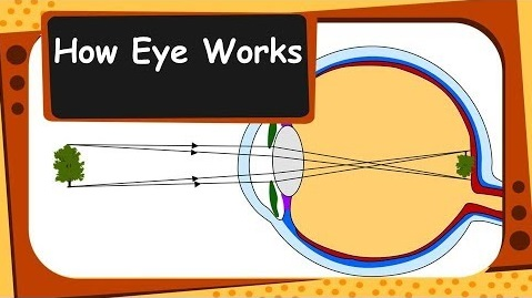 working of human eye