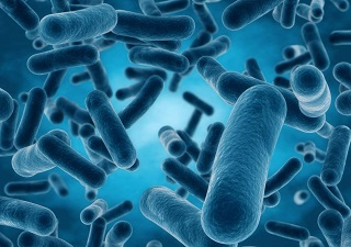 microorganisms notes for class 8