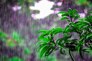 rain as natural resource