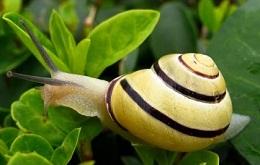 snails-Mollusca