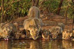 wildlife-sanctuary