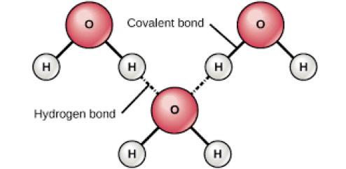 Hydrogen bond in States of Matter