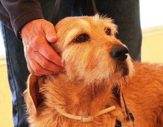 Tellington TTouch relaxes a dog