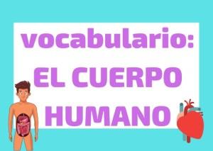 vocabulario cuerpo humano italiano