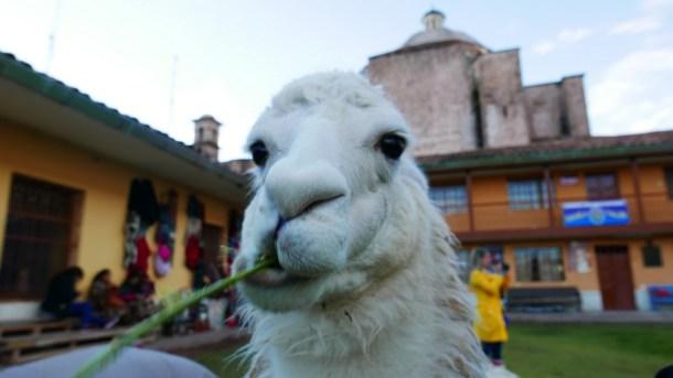PEROU l Cusco, à la croisée des Incas-sables !