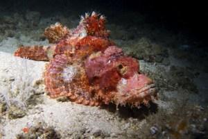 stonefish-800x533