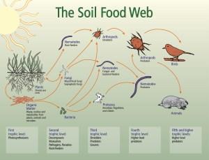 USDA Food Web