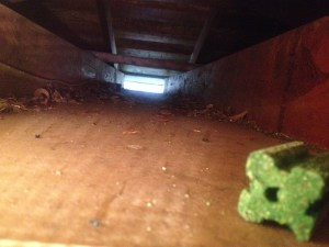 Attic with baits
