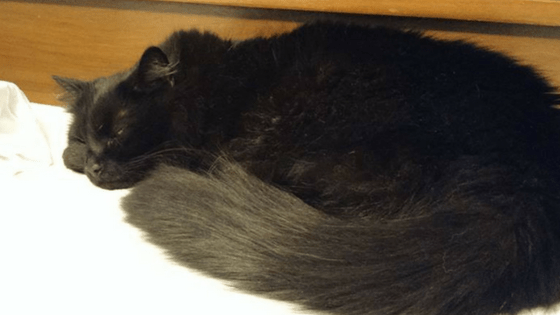 Do Cats Have Dreams While Sleeping