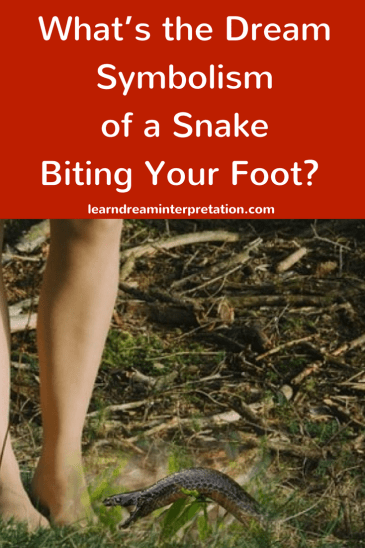 Snake Biting Your Foot in a Dream