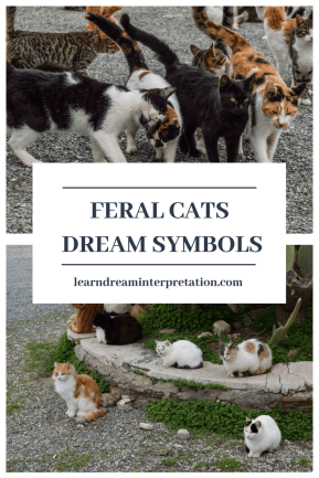 Feral Cats Dream Symbol