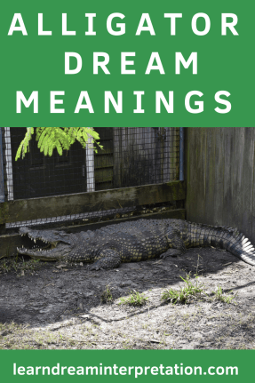 Alligator Dream Meanings with plenty of alligator photos and a video