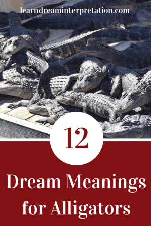 Twelve Dream Meanings for Alligators