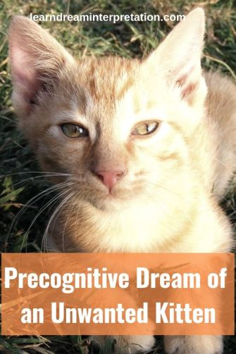 Precognitive Dream of an Unwanted Kitten