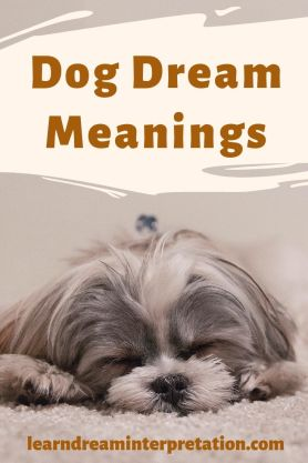 Dog Dream Meanings