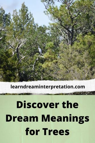 Dream Meanings for Trees