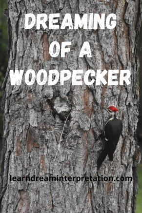 Woodpecker-symbol-for-dream-interpretation